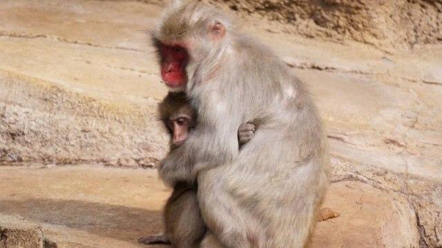 夢占い 猿