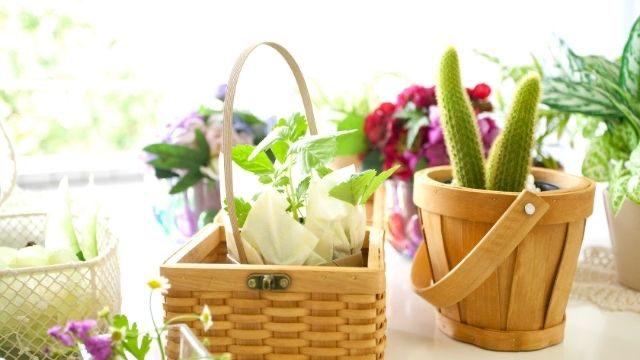 風水,観葉植物