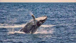 夢占い クジラ