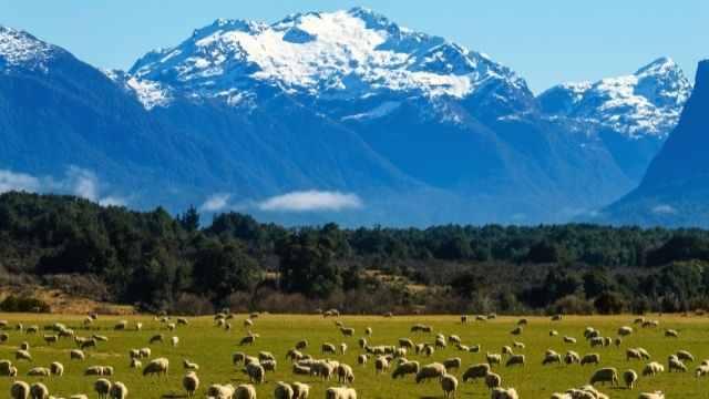 ニュージーランド,観光