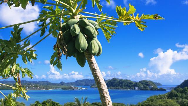 ハワイ,楽しみ方