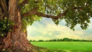 夢占い 木