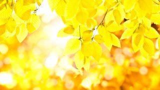夢占い 黄色