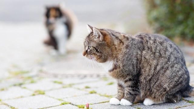 猫 スピリチュアル