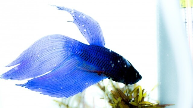 夢占い 熱帯魚