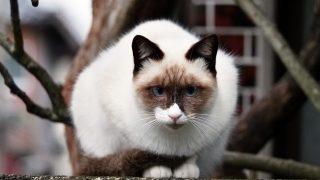 野良猫が来る家や寄ってくる人のスピリチュアルな6つの意味とは
