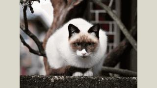 Stray cat / spiritual