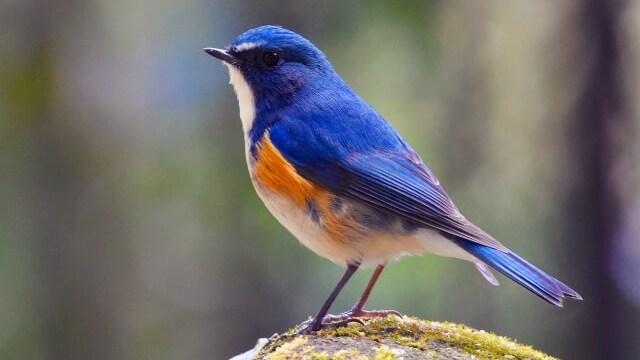 鳥,スピリチュアル
