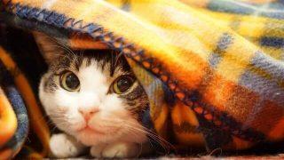 夢占い 毛布