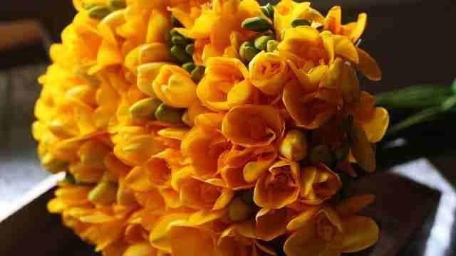 花言葉,フリージア