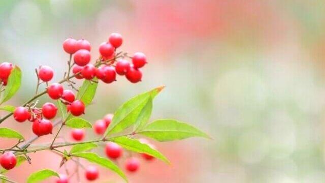 夢占い 木の実