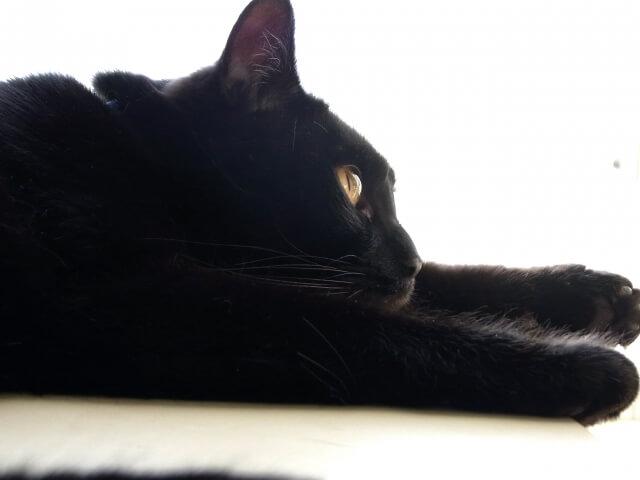 黒猫にまつわるスピリチュアルな意味やサインとは