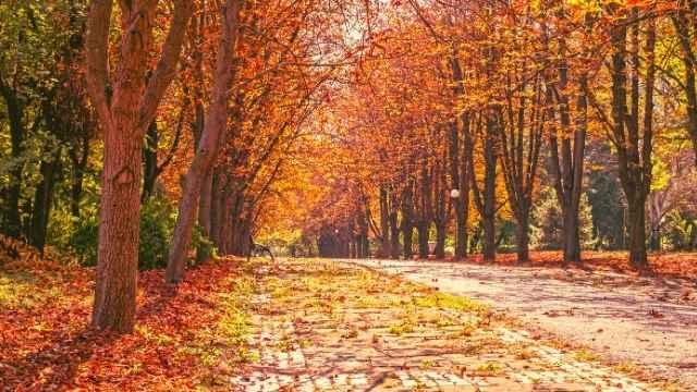 夢占い 秋