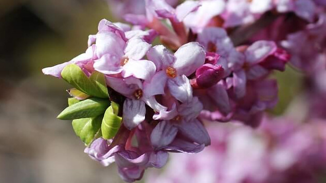 flower language, winterdahne_2
