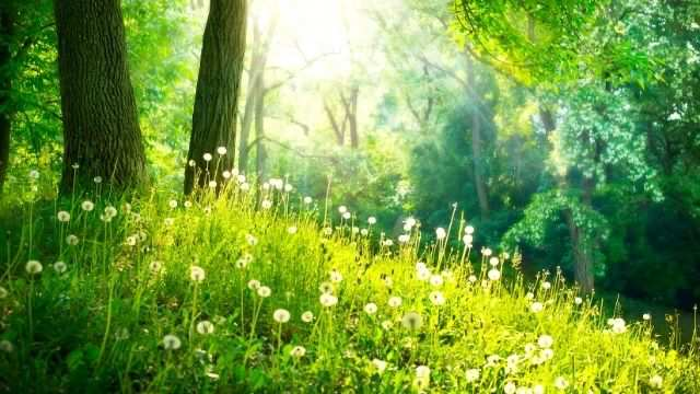 夢占い 縁起がいい植物の夢
