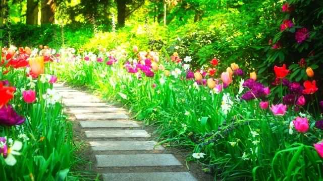 夢占い 春