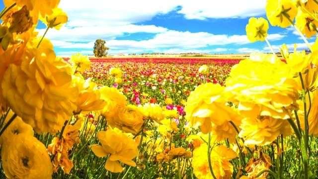 花の香り診断