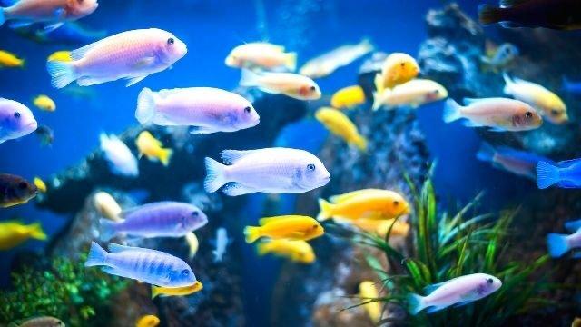 夢占い,魚,吉夢